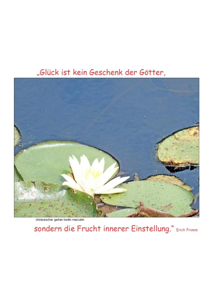 """""""Glück ist kein Geschenk der Götter, sondern die Frucht innerer Einstellung."""" (Erich Fromm"""