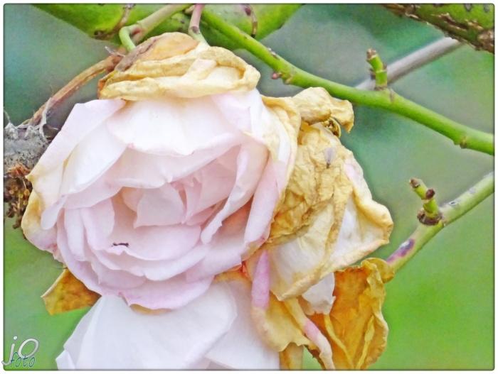 HERBTSBLUMEN … Es gibt überall Blumen fürden,